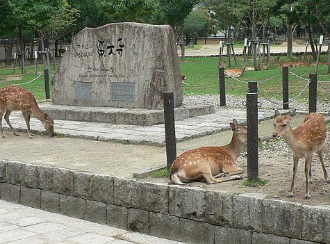 20070725_Toda-Ji_marker_deer.jpg