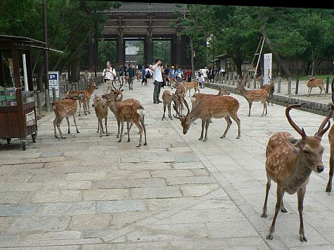 20070725_Toda-Ji_walk_deer_gate.jpg