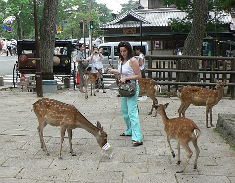 20070725_Toda-Ji_walk_deer_tourist.jpg