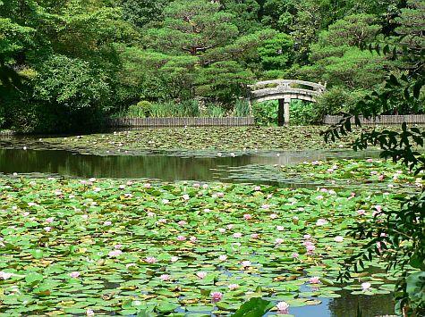 20070726_Ryoan-ji_pond_bridge.jpg