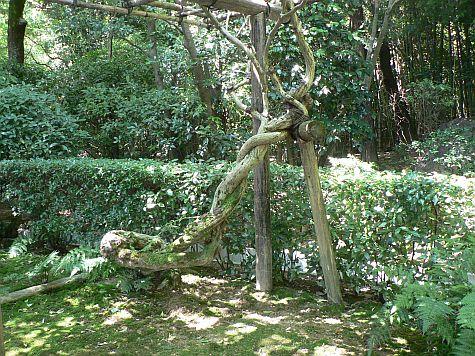 20070726_Ryoan-ji_tree_support.jpg