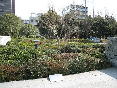 DI_20080303_Ono_Wish_Tree_for_Tokyo.jpg