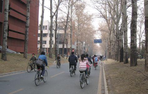 DI_20080311_Tsinghua_street_bikes.jpg