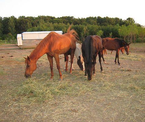 DI_20080715_WiscRanch_horses.jpg