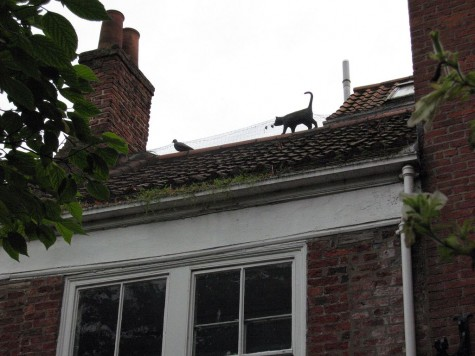 DI_20080910 112222 York KingsSquare rooftop cat