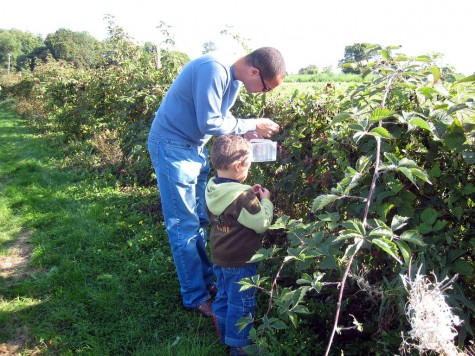 DI_20080914 105036 Surrey FlowerFarmShop blackberry picking